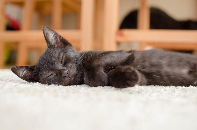 černé kotě