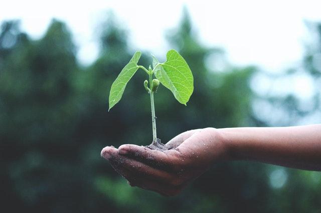 rostlina na dlani